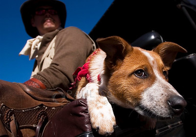 © Paul Conrad/Pablo Conrad Photography  Carriage driver Randy Melton of Redstone and his trusty red heeler Spur wait for a customer at the intersection of Cooper Avenue and Galena Street in Aspen, Colo.