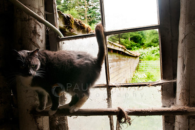 © Paul Conrad/Pablo Conrad Photography  A cat in a window near Everson, Wash.