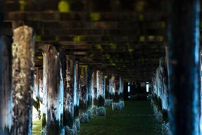 Under The Coupeville Pier - 0384