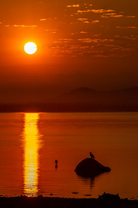 Sunrise Over Bald Eagle On Rock