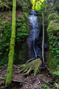 Chuckanut Falls in Summer