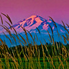 Mount Baker and Grass