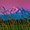 Mount Baker and Grass