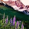 Capitol Peak & Fireweed