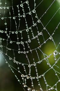 Dewy Spiderweb - 0076