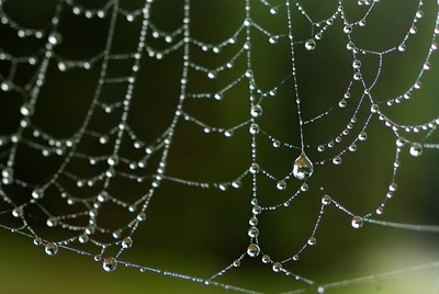 Dewy Spiderweb - 0099