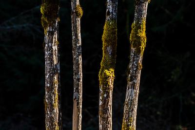 190319-TreeTrunks 0353