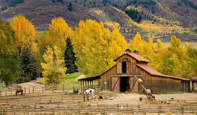 © 2008 Paul Conrad/Sky Fire Photography A barn is surrounded by the peaking colors of fall on an East Sopris Creek ranch in Old Snowmass, Colorado.   Send Me Your Thoughts and Questions