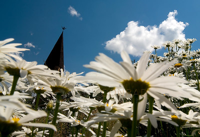 © 2008 Paul Conrad/Sky Fire Photography the steeple of the Aspen Chapel appears to float in a sea of daisies in Aspen, Colorado.   Send Me Your Thoughts and Questions