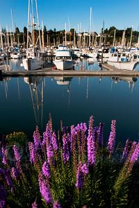 © Paul Conrad/Pablo Conrad Photography  Fireweed grows along Bellingham Harbor in Bellingham, Wash.