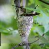 Nest maintenance: Spider silk
