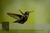 We have hummingbirds!