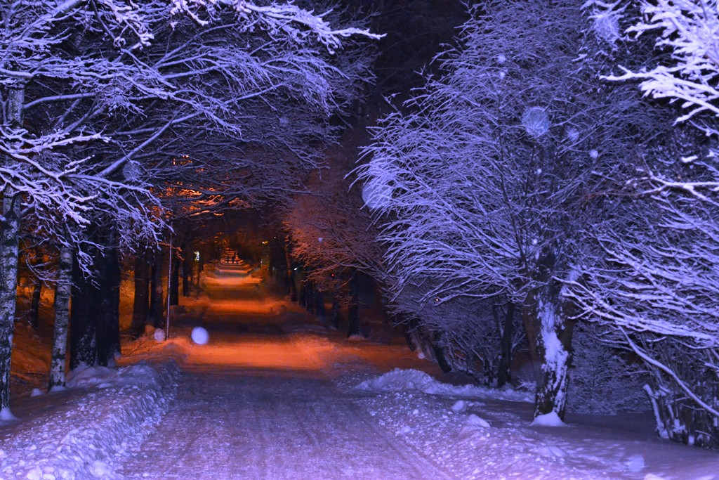 Winter-Landscape-Photography