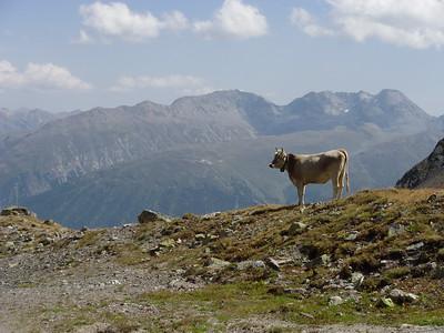 Corviglia - St.Moritz