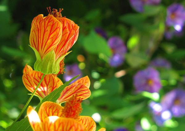 Wildflowers in Villafranch, France,  #0095