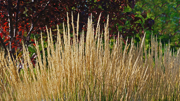 Fall road grass, Shoreview, Mn., #0189