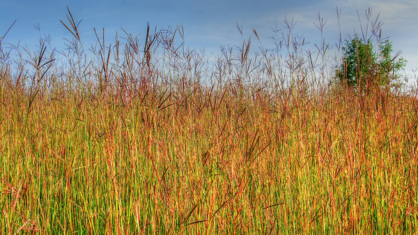 Summer grasses reach high on the prairie near Balsam Lake, Wisconsin near the Apple River, #0107