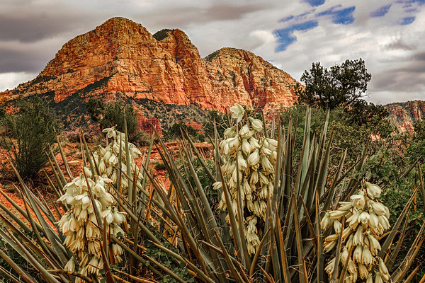 Yucca in the Rocks, #1854