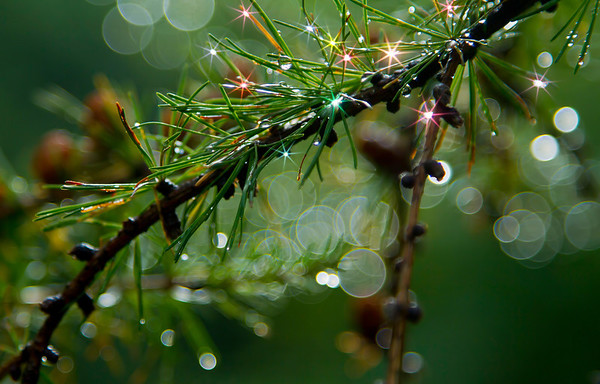 Sparkling raindrops on branch, #0455