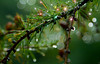 Sparkling raindrops on branch, #0455