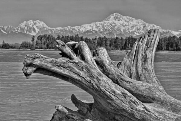Deadwood overlooking Mt. McKinley, Alaska, #0426