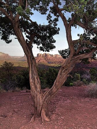 Red rocks of Sedona, Arizona, #0100