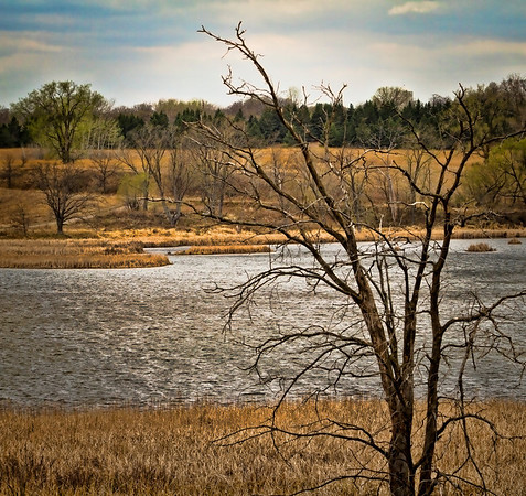 Early spring in Arden Hills, Mn. National Guard Wildlife Refuge, #0329