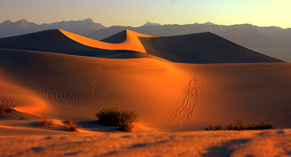 Mesquitte Sand Dunes at sunrise in Death Valley, #0112