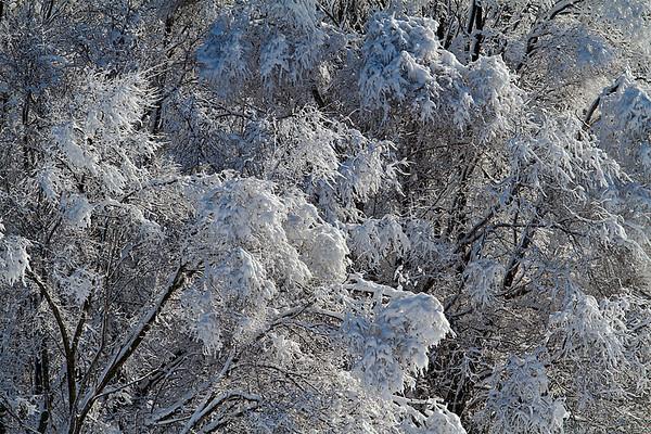 Fresh fallen snow, Minnesota, #0682