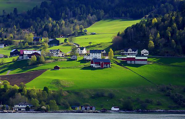 Farmland along the Norwegian fjords  #0369
