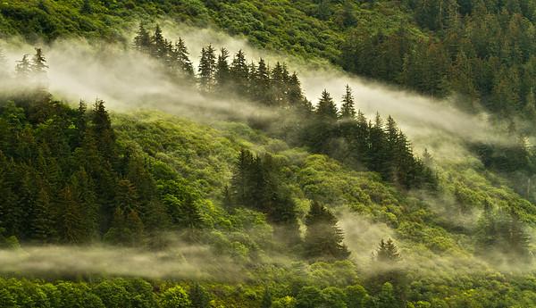 Fog on the Inside Passage, near Ketchikan, Alaska, #0147