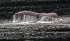Humpback whale, Alaska  - #0138