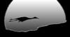 Sandhill Crane, Socorro, NM, Bosque del Apache, #0239