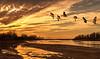 Sandhills by Sunset