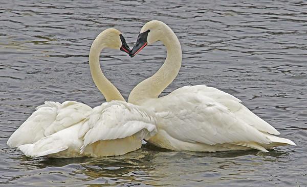Valentines Day Kiss; #1350