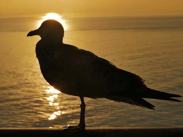 Seagull in Spain, #1300