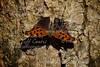 2012-04-26-Butterfly-ECPk-01