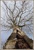 2014-01-06-Tree-JeffHouse-01