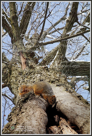 2014-01-06-Tree-JeffHouse-04