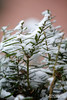 2014-01-16-Snow-JeffHouse-01 - Version 2