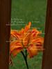 2011-07-12-Flower-1 of 1