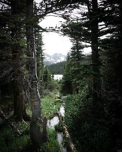 Magical forests of Colorado.