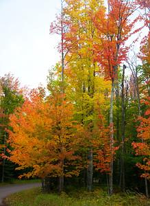 Porcupine Mt St Park Foliage