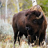 Tetons_buff 1 of 1.jpg
