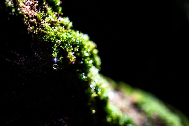 Nature/Landscape