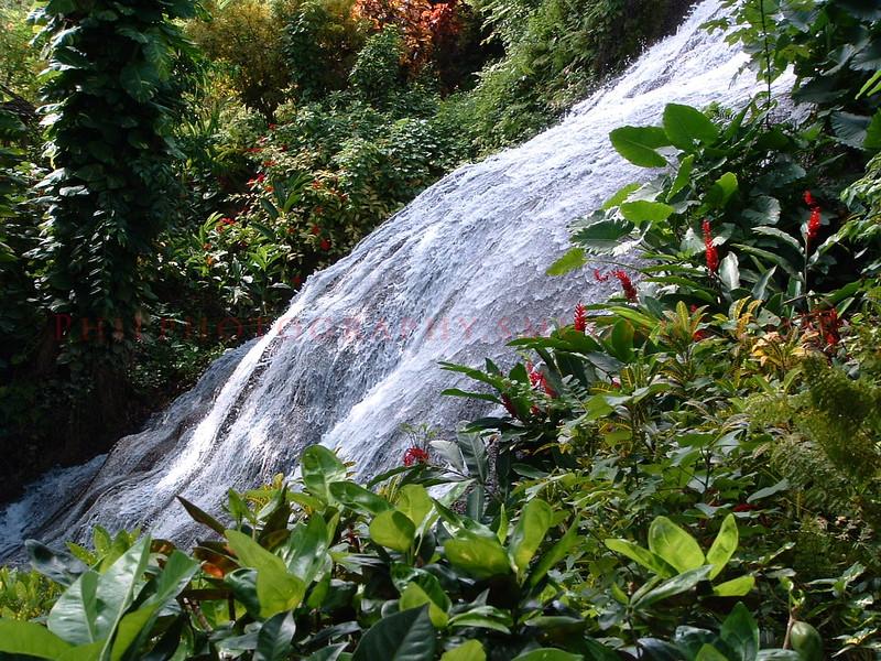 Botanical Garden in Jamaica