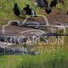 2014-02-02-KitCarlsonPhoto-141021