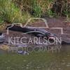 2014-02-02-KitCarlsonPhoto-141025