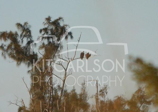 2012_11_24_K Carlson_46654