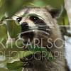 2012_11_19_K Carlson_46358